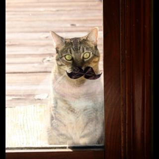 Cat+in+a+mustache