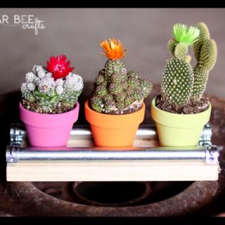 Mini+cactus+display+board