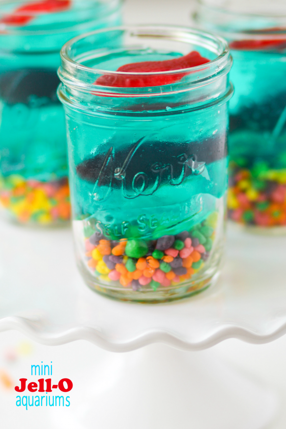mini-jello-aquariums-picture-584x876