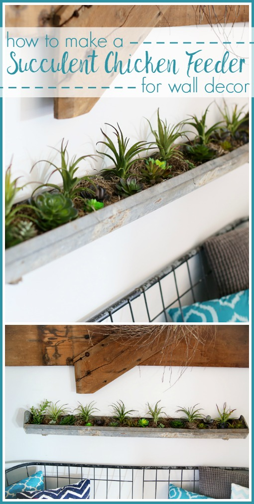 succulent chicken feeder wall decor