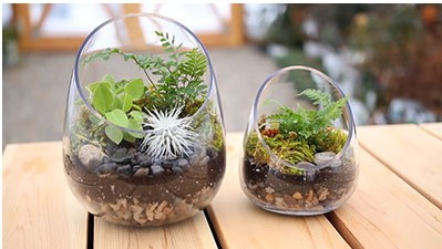 diy-modern-glass-plant-terrarium-200317-432-01