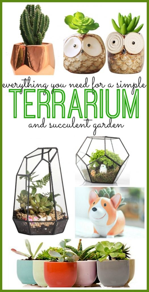 Everything You Need For a Perfect Terrarium/Succulent Garden