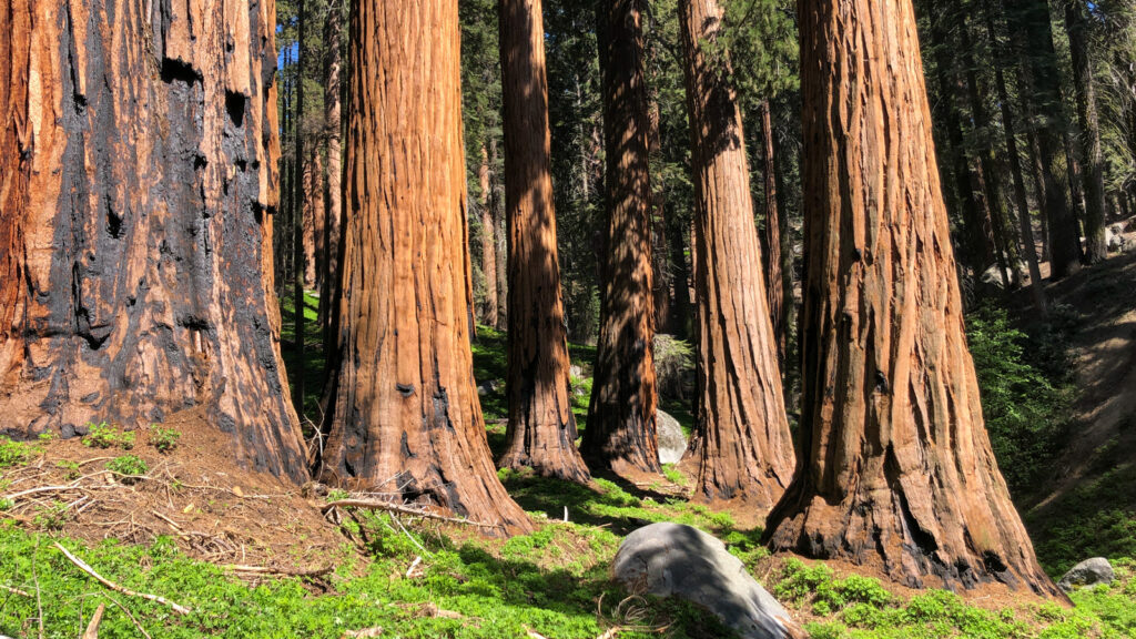 Sequoia zoom virtual backgrounds national parks 22
